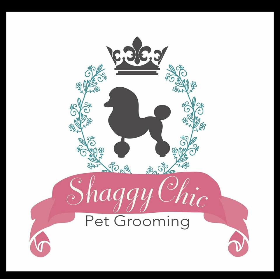 Shaggy chic grooming by tonya opens doors in alabaster macaroni kid after eliza was groomed by tonya for the first time i did not even recognize her yes this is the same dog as in the cover picture for this article solutioingenieria Image collections
