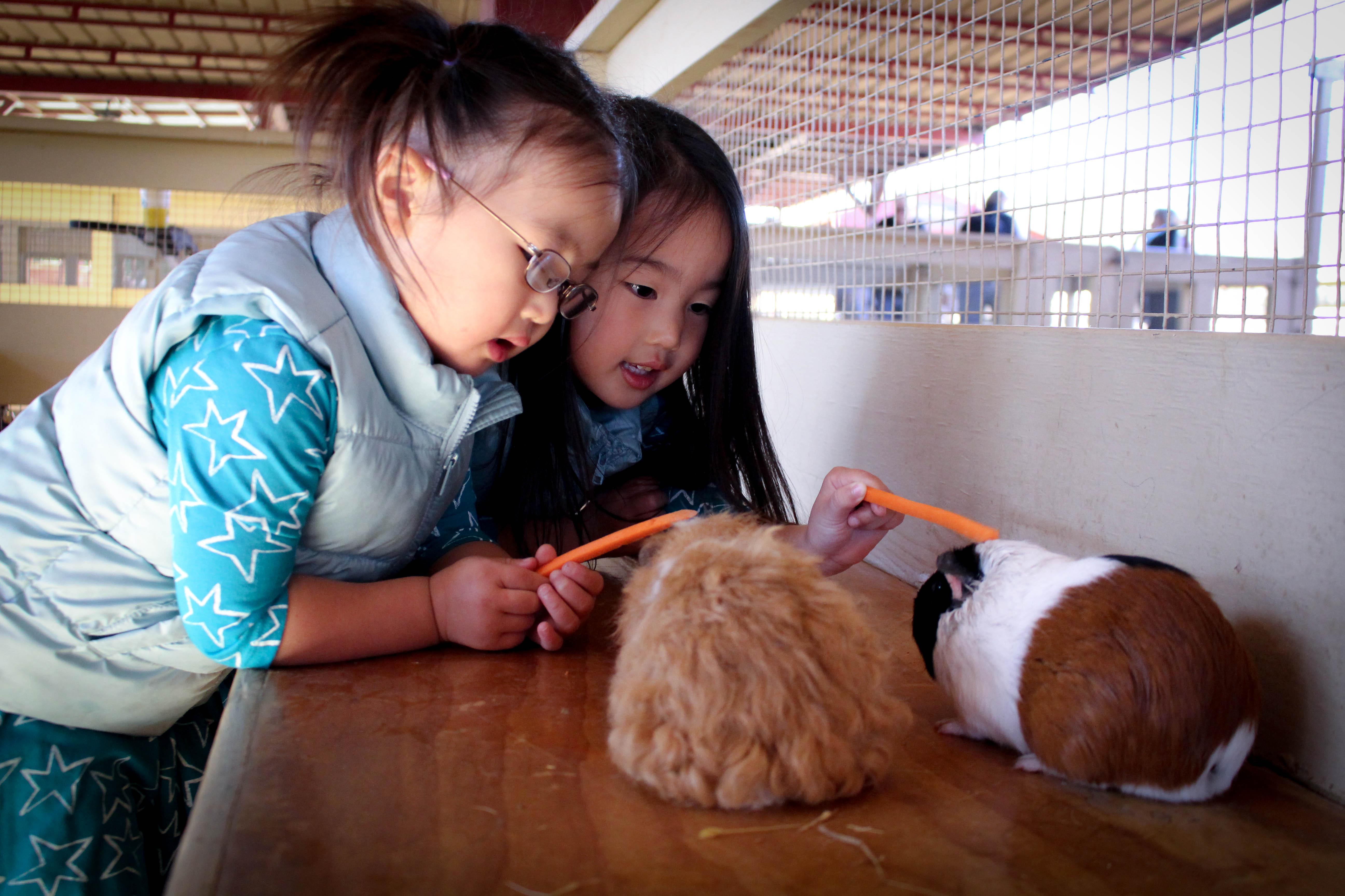Zoomars Petting Zoo Review Macaroni Kid