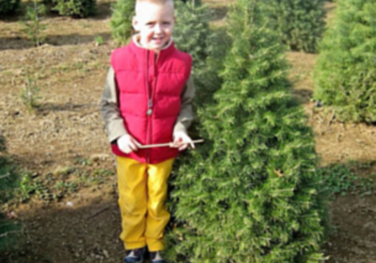 Christmas Tree Farms In Lebanon County Macaroni Kid Lebanon