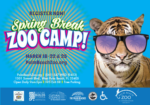 Spring Break Zoo Camp at the Palm Beach Zoo