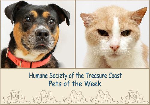 HSTC Macaroni Pets of the Week Shiva and Sam