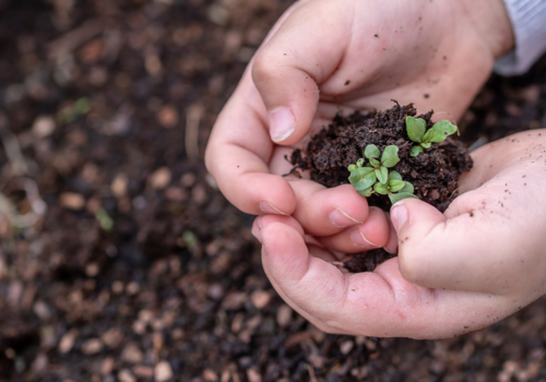 Earth Day, child hands with sprout