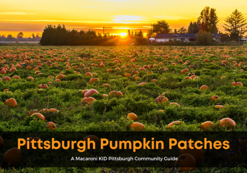 Pittsburgh Pumpkin Patches (3)
