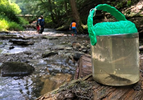 Eco Edventures