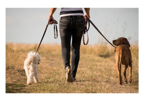 Dog Walk Outdoors