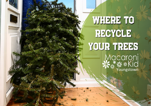 Where to recycle trees in Youngstown