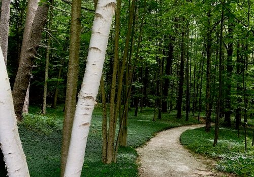 The Mount woodland walk
