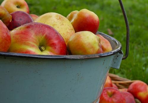 Berks County Apple Picking Tips