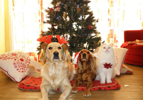 pets tree christmas