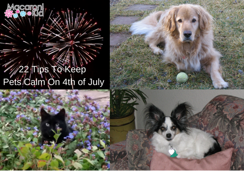 22 Tips to Keep Pets Calm On 4th of July