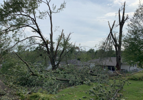 damaged trees in Cedar Rapids from the derecho 2020