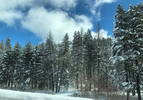 Tahoe Snow and Trees