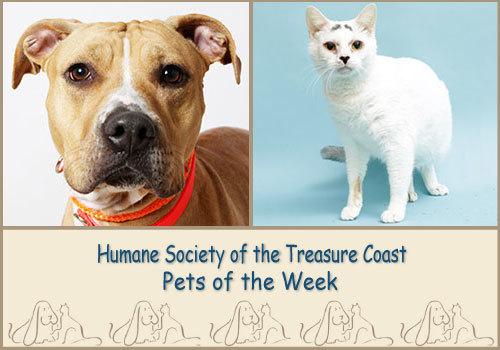 HSTC Macaroni Pets of the week Princess & Lola
