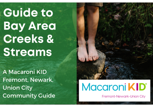 7 Creeks and Streams in the Bay Area for Kids to Splash In!