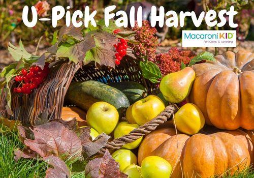 U Pick Fall Harvest