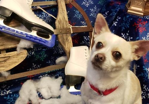 ADOPTABLE DOG CENTER FOR ANIMAL HEALTH AND WELFARE EASTON PA LEHIGH VALLEY SPCA