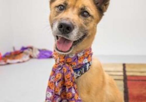 adoptable dog from the Center for Animal Health and Welfare, Easton, PA November 2019