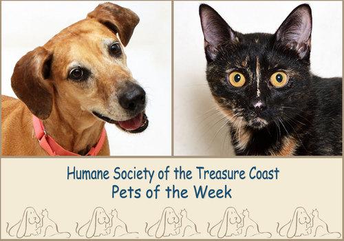 HSTC Macaroni Pets of the Week Malibu and Cranberry