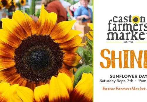 sunflower pooch parade flower sale easton farmer's market September 7, 2019 Lehigh Valley