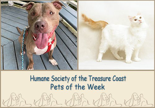 HSTC Macaroni Pets of the Week Lemony Snicket and Tank