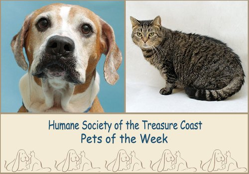 HSTC Macaroni Pets of the Week Sandy and Momma