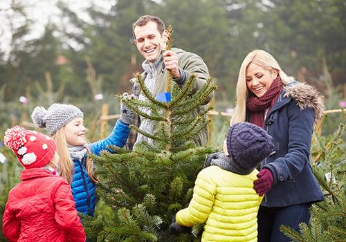A family picks out a Christmas tree at a tree farm