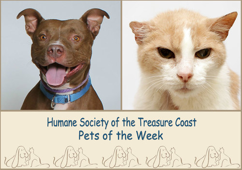 HSTC Macaroni Pets of the Week Sasha and Sam