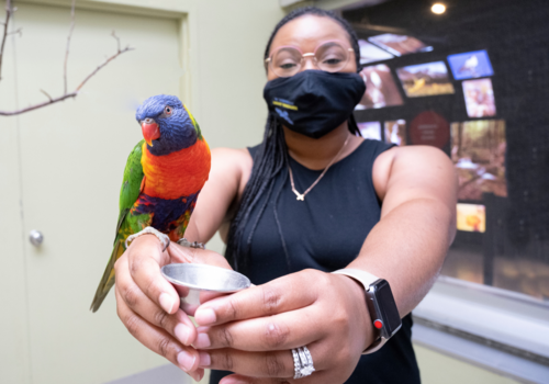 National Aviary Guest