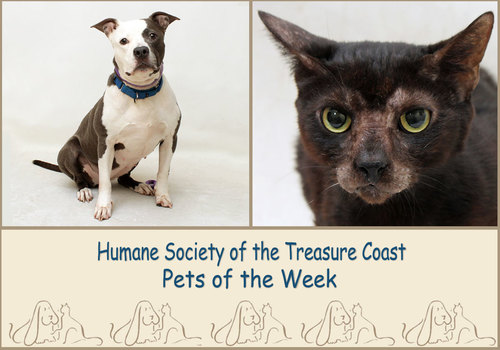 HSTC Macaroni Pets of the Week Luna and Calliope