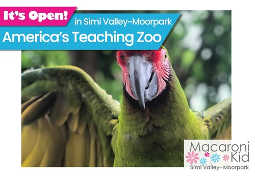 It's Open - America's Teaching Zoo image of green macaw with wings open