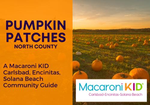 Pumpkin Patch Fun in North County 2021