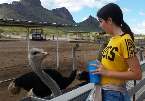 Girl with Ostrich at Rooster Cogburn Ostrich Ranch