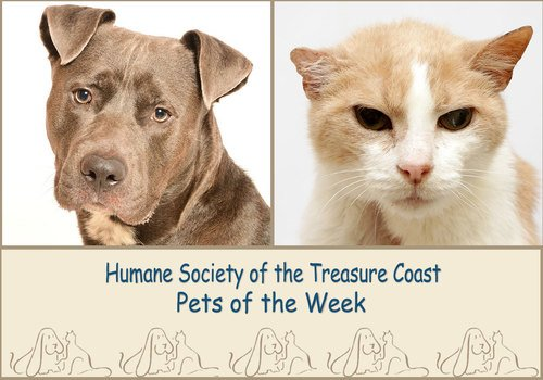 HSTC Macaroni Pets of the Week Ace and Sam