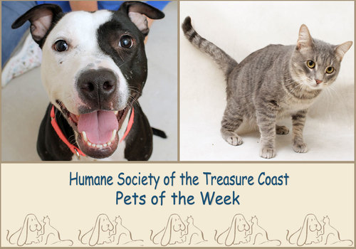 HSTC Macaroni Pets of the Week - Cookie and Jaws