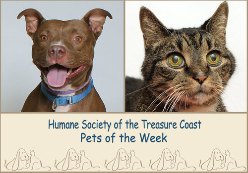 HSTC Macaroni Pets of the Week, Sasha and Walter