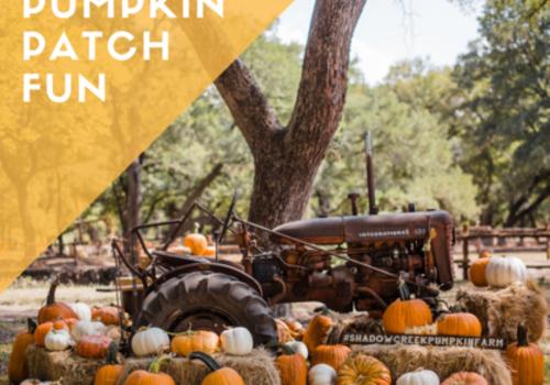 Pumpkin Patch North County San Diego 2019