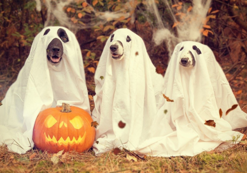 Dogs Halloween Fall Festival Carlsbad