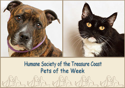 HSTC Macaroni Pets of the Week Baily & Luna