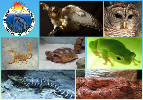 Hobe Sound Nature Center Florida's Native Animals Art Class