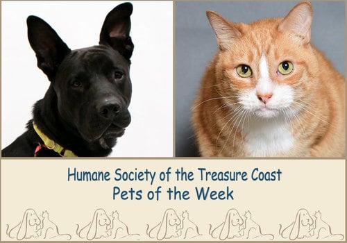HSTC Macaroni Pets of the Week Charlie and Samantha