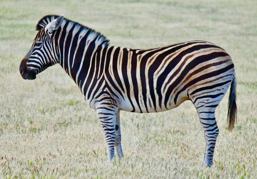 Six Flags Safari Drive Thru Reopens