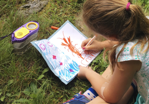 child drawing bugs outdoors at nature camp