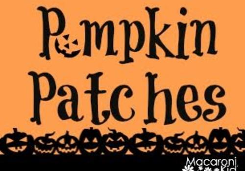 Pa's pumpkin patch | pumpkins, rides, games & fun for the entire.