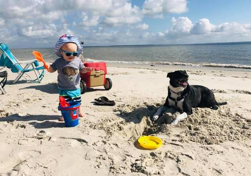 Hilton Head Island Beach - Kid and Dog Playing