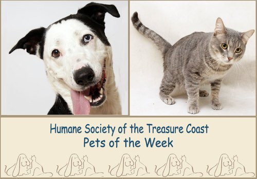 HSTC Macaroni Pets of the Week, 4/30/21, Neka and Jaws