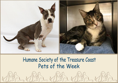 HSTC Macaroni Pets of the Week Skyy and Beans