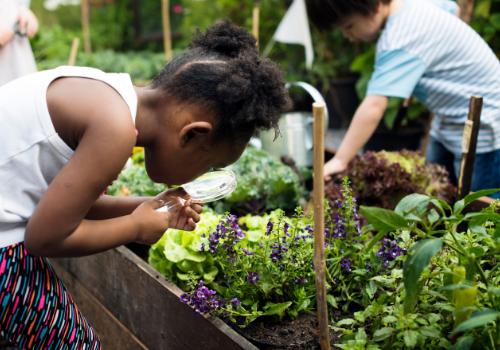 Kids gardening club in Rockland MA