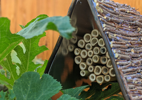 bee hotel, insect farm