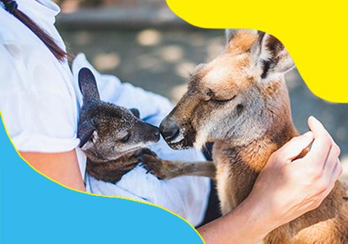 Kangaroos at Cobb's Adventure Park