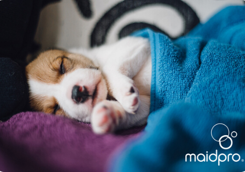 tips and hacks for cleaning safely when you have pets from MaidPro